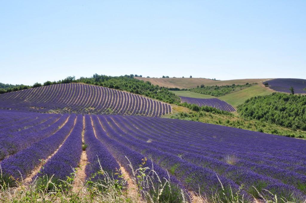 Find a dream Provence villa rental